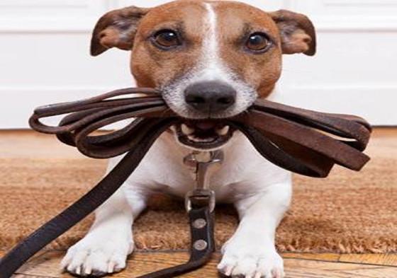 Dog-watch-Palmdale