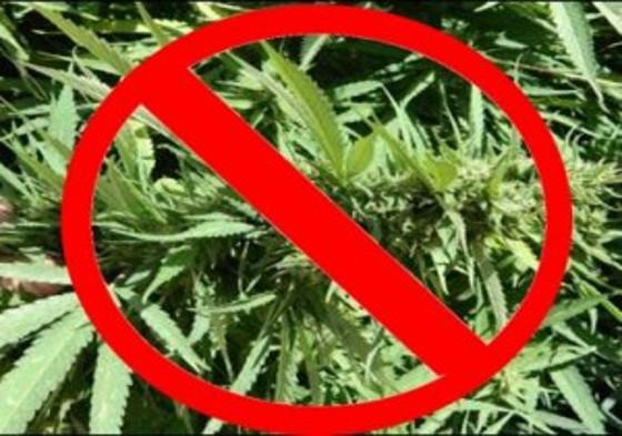Marijuana-ban-300x232